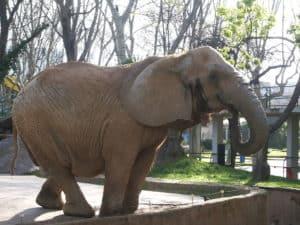 1024px-elefante