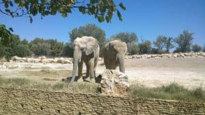 1024px-elephants_sigean