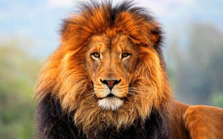 Африканский заповедник Сижан
