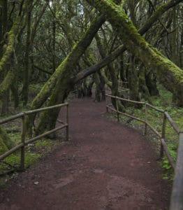 bosque_encantado_parque_nacional_de_garajonay_la_gomera_espana_2012-12-14_dd_18-893x1024