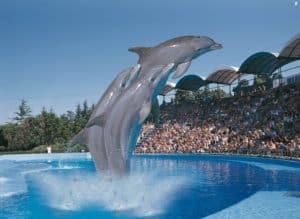 delfines002