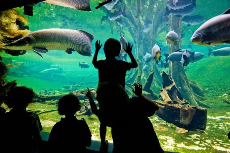 Музей Космо Кайша (Cosmo Caixa)  — современная наука для детей и взрослых