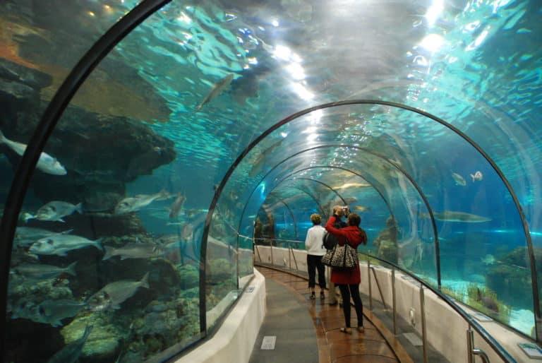 Аквариум Барселоны или «Сказочный подводный мир»